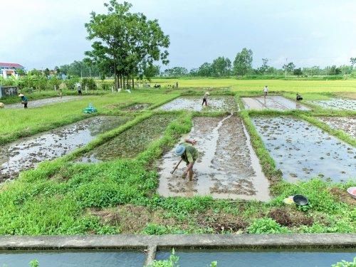 Bà con nông dân xã Hoàng Xuân tập trung gieo mạ vụ mùa năm 2021.jpg